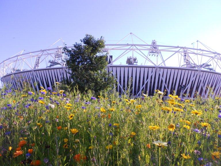 """""""Floral Stadium"""""""