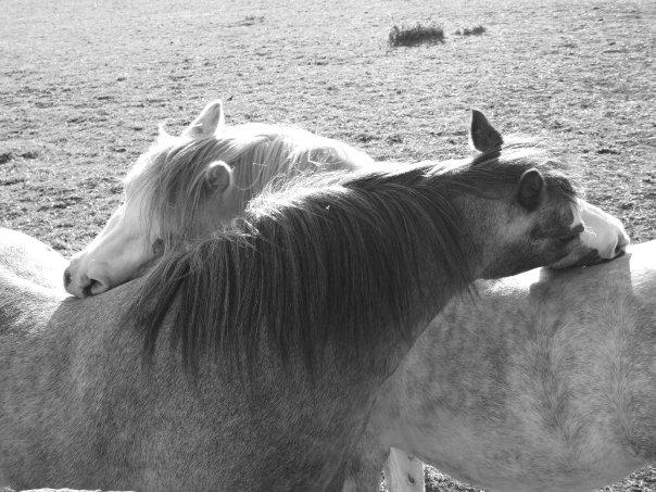 """""""Pony Passion"""""""