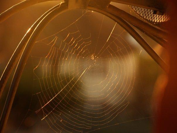 """""""Itsy Bitsy Spider II"""""""