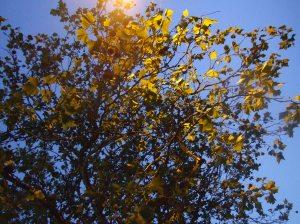 """""""Streetlamp Twilight Tree"""""""