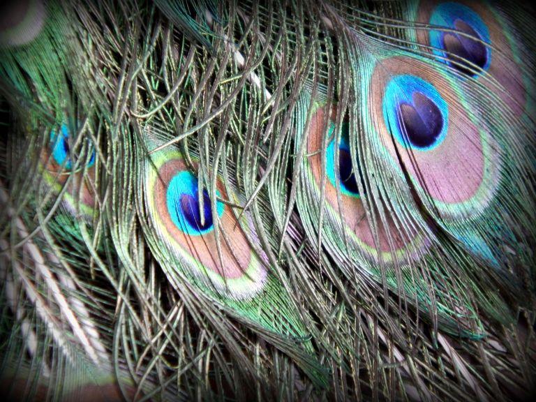 Lokrum Feathers